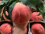 Bị hét giá 400.000 đồng/quả, hồng Nhật Bản vẫn đắt hàng ngày Trung thu-4