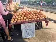 Đào Sapa to mọng giá 20.000 đồng/1 kg bán đầy đường nhưng nguồn gốc xuất xứ còn bỏ ngỏ