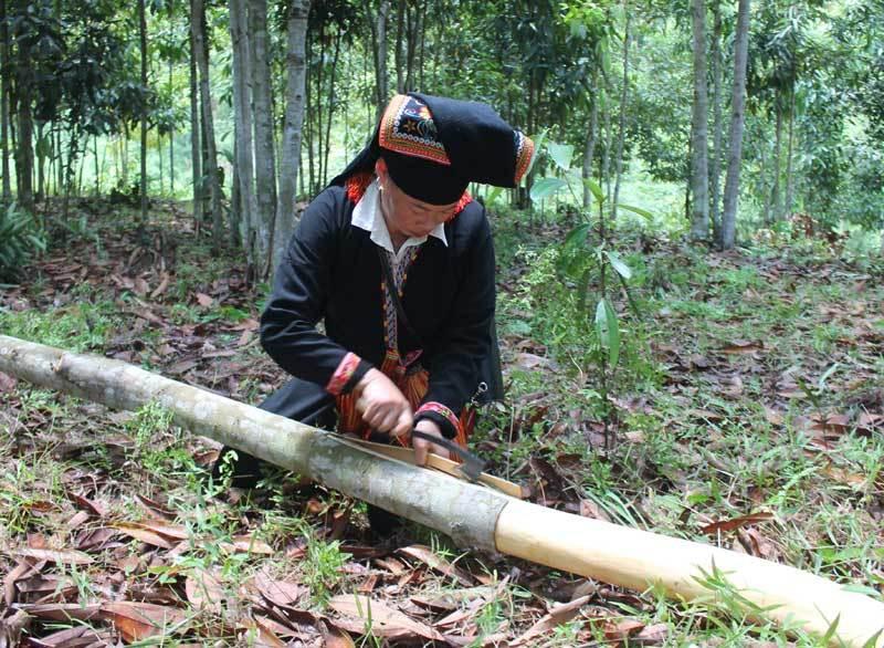 Trồng rừng cây bóc vỏ bán, lão nông thu tiền tỷ giấu đầy gác bếp-1