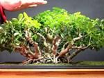 Hà Nội đang ô nhiễm nặng, nông dân phố trồng 9 loại cây này giúp lọc khí, mang tài vận-10