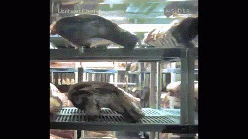 Thịt bò để tận 15 năm vẫn bán với giá 73 triệu: Sự thật về giá trị mới ngỡ ngàng-1