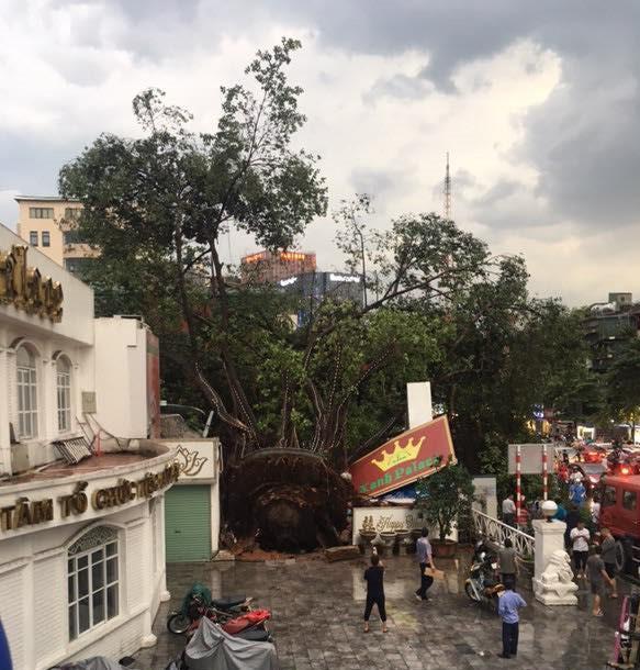 Bão số 4 đang di chuyển vào đất liền, Hà Nội mưa gió khủng khiếp, đã có 1 người chết do cây xanh đè trúng-8