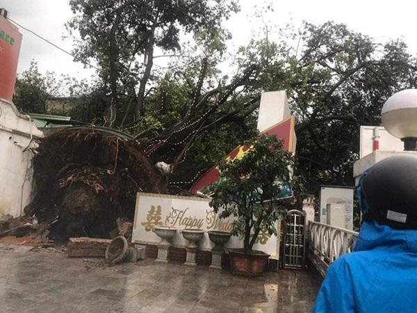 Xót xa cảnh người thân gào khóc thảm thiết tại hiện trường nam thanh niên tử vong vì cây đổ ở Hà Nội-1