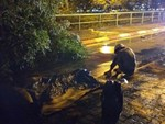 """Cây bật gốc đè chết người trong mưa giông: Phải loại bỏ những cây quá già chứ không thể giữ vĩnh cửu""""-5"""