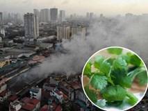 Từ vụ cháy ở công ty Rạng Đông: Người dân cần biết dấu hiệu khi cơ thể bị nhiễm độc thủy ngân và cách giải độc thủy ngân