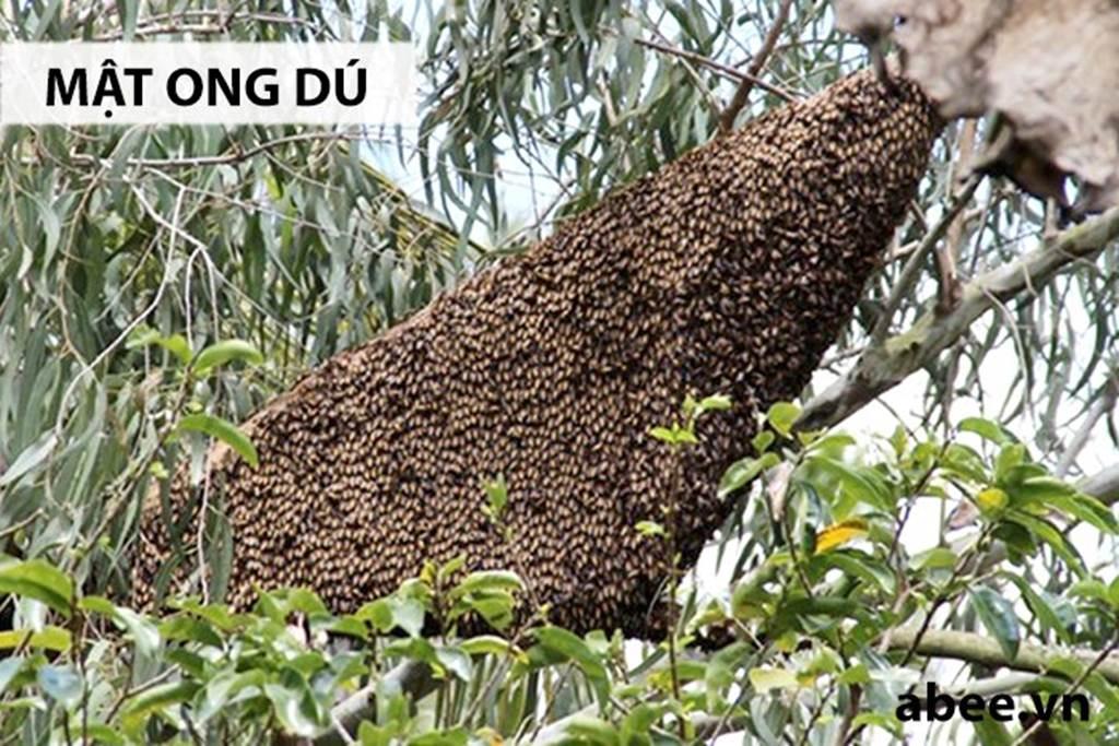 Mật ong rú giá trên trời: Có vàng 9999 chưa chắc mua được giọt vàng-2