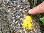 Những thực phẩm không nên kết hợp với mật ong để tránh gây hại sức khỏe-5