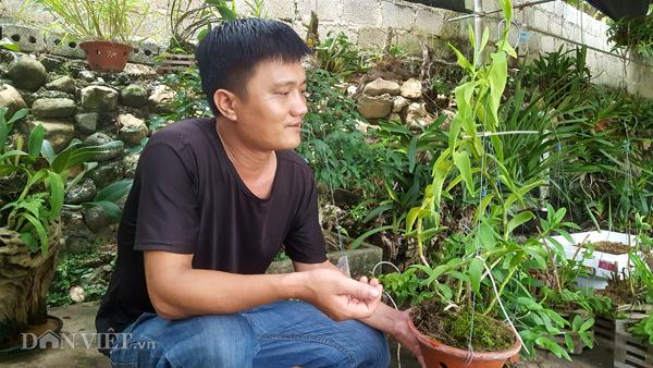 8X Lạng Sơn mê phong lan rừng: Kiếm trăm triệu từ 1 câu nhỡ mồm-2