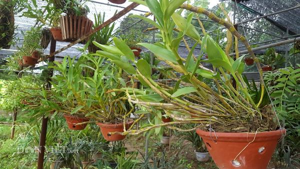 8X Lạng Sơn mê phong lan rừng: Kiếm trăm triệu từ 1 câu nhỡ mồm-3