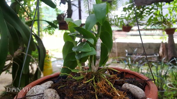 8X Lạng Sơn mê phong lan rừng: Kiếm trăm triệu từ 1 câu nhỡ mồm-5
