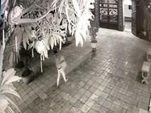 Nam thanh niên trộm hòm công đức trong vòng 15 giây