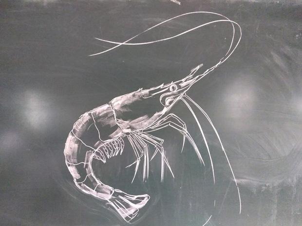Thầy giáo trổ tài vẽ tranh bằng phấn, dân tình thán phục: Đẹp quá chẳng nỡ xóa đi!-4