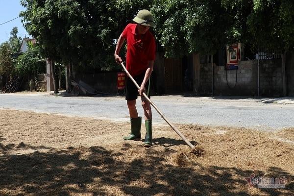 Thóc nảy mầm vứt cho trâu ăn, dân rơi nước mắt lo ngày mai-7