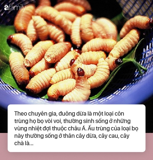 Sốc phản vệ khi ăn đuông dừa, nhộng tằm: Ai cũng cần biết những điều này để bảo vệ sức khỏe, tính mạng-1