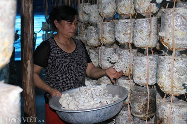 Xắn tay áo lao vào trồng nấm mọc tua tủa, thu 30 triệu/tháng-1