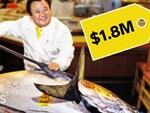 Sự thật tàn khốc đằng sau miếng sushi cá ngừ đắt giá-6