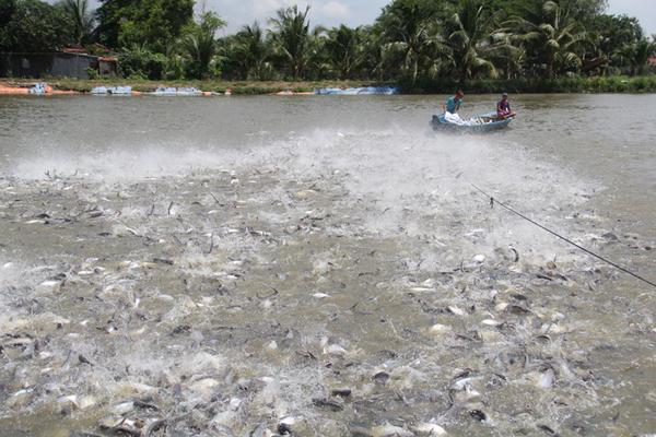 Chuyện Tám Đậu, còng lưng nuôi 2.000 tấn cá/năm rồi ôm tiền tỷ đi từ thiện-1