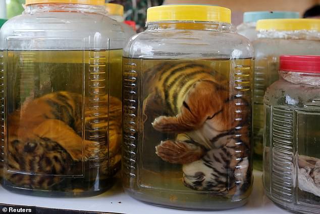 Chùa Hổ nổi tiếng Thái Lan bị cáo buộc lạm dụng, buôn bán hổ trái phép trên thị trường chợ đen-3