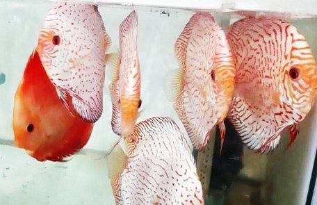 Người nuôi cá cảnh độc, lạ được Thủ tướng tặng 2 bằng khen là ai?-2