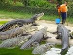 Người đàn ông tay không vật lộn với cá sấu trong hồ bơi-1