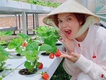 """Sao Việt và cuộc sống """"trồng rau nuôi gà"""" ở những nông trại tiền tỷ"""
