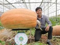 Quả bí ngô siêu to khổng lồ nhất Việt Nam