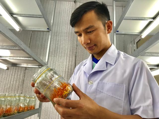 """Bỏ lương 14 triệu/tháng về quê trồng siêu nấm"""" kiếm 500 triệu/năm-1"""