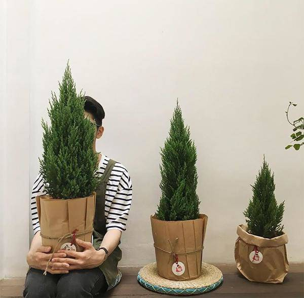 Mệnh Mộc hợp cây gì rước lộc vào nhà?-5