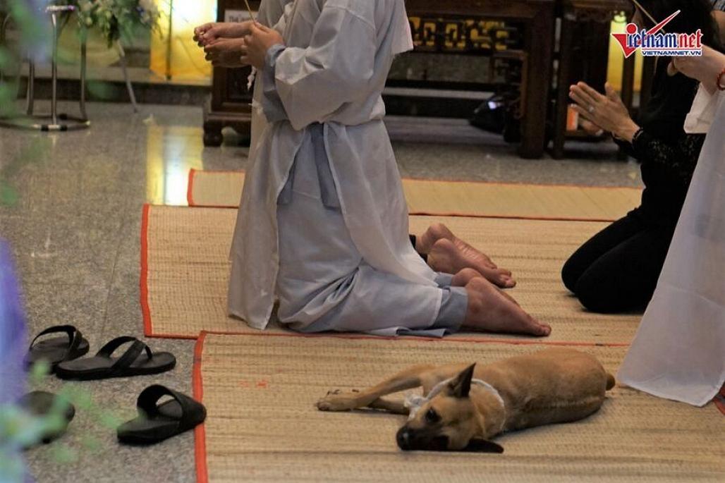 Chú chó của nghệ sĩ Xuân Hiếu bỏ ăn, nằm phục bên linh cữu chủ-6