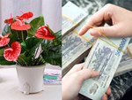 Tuổi Mùi hợp cây gì trồng trong nhà sẽ hút nhiều tài lộc, may mắn cho gia chủ?-10