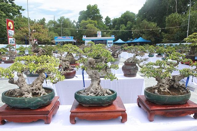 Mãn nhãn với vẻ đẹp kỳ dị của hàng trăm cây sanh bonsai ở Thanh Hóa-1