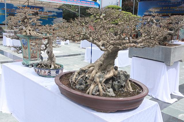 Mãn nhãn với vẻ đẹp kỳ dị của hàng trăm cây sanh bonsai ở Thanh Hóa-10