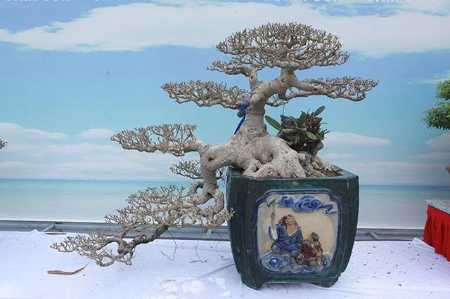 Mãn nhãn với vẻ đẹp kỳ dị của hàng trăm cây sanh bonsai ở Thanh Hóa-11