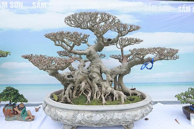 Mãn nhãn với vẻ đẹp kỳ dị của hàng trăm cây sanh bonsai ở Thanh Hóa-12