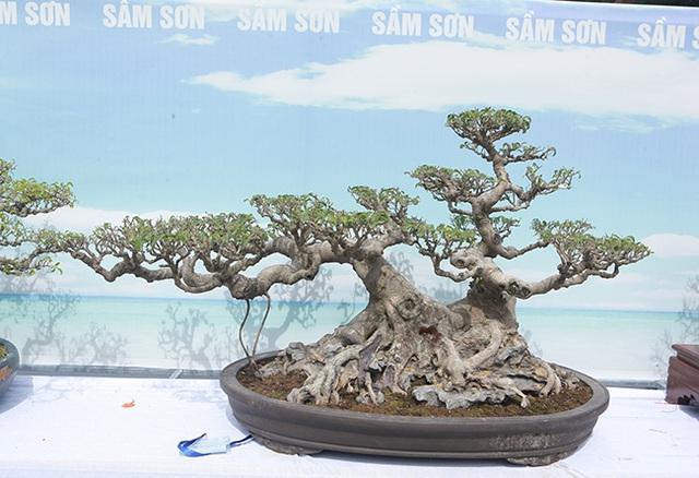 Mãn nhãn với vẻ đẹp kỳ dị của hàng trăm cây sanh bonsai ở Thanh Hóa-14