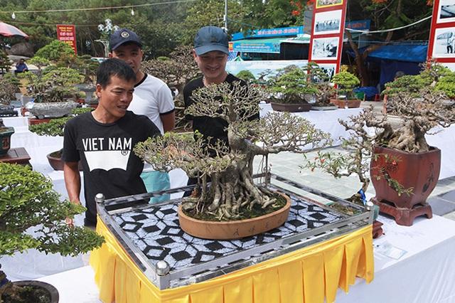 Mãn nhãn với vẻ đẹp kỳ dị của hàng trăm cây sanh bonsai ở Thanh Hóa-3