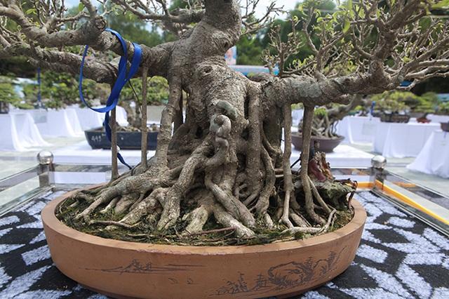 Mãn nhãn với vẻ đẹp kỳ dị của hàng trăm cây sanh bonsai ở Thanh Hóa-4