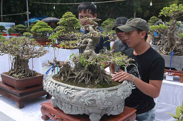 Mãn nhãn với vẻ đẹp kỳ dị của hàng trăm cây sanh bonsai ở Thanh Hóa-5