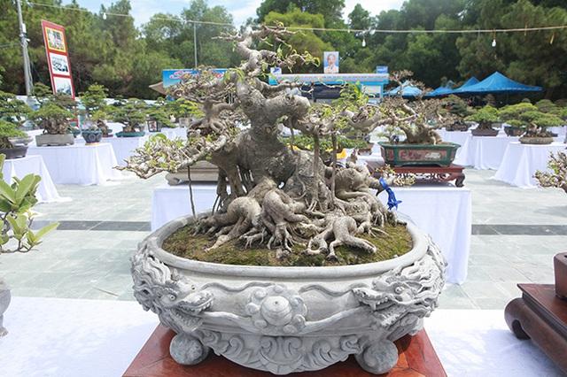 Mãn nhãn với vẻ đẹp kỳ dị của hàng trăm cây sanh bonsai ở Thanh Hóa-6