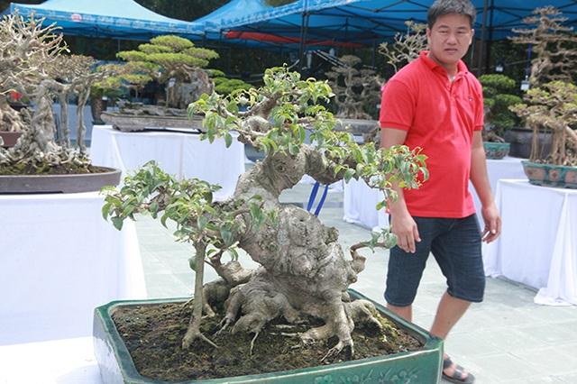 Mãn nhãn với vẻ đẹp kỳ dị của hàng trăm cây sanh bonsai ở Thanh Hóa-7