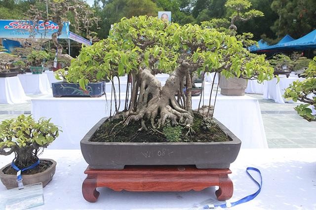 Mãn nhãn với vẻ đẹp kỳ dị của hàng trăm cây sanh bonsai ở Thanh Hóa-8