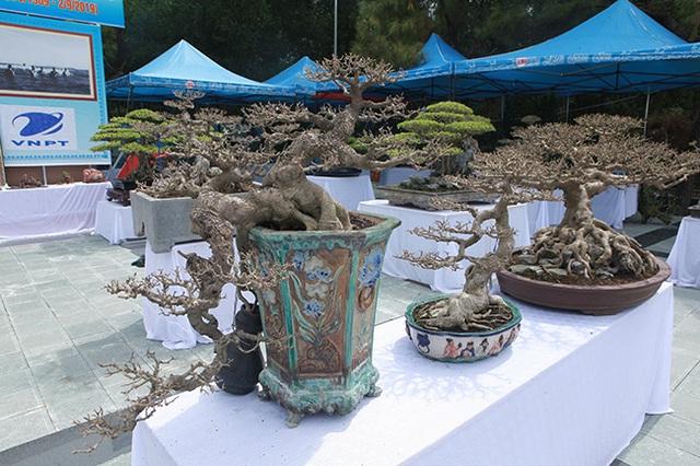 Mãn nhãn với vẻ đẹp kỳ dị của hàng trăm cây sanh bonsai ở Thanh Hóa-9