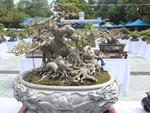 Siêu cây trị giá 20 triệu USD, người Nhật trả không bán-4