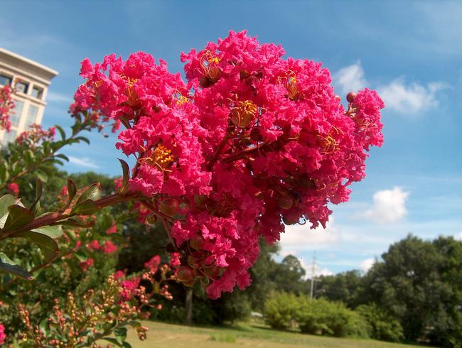 Người sinh vào mùa xuân-hạ-thu-đông nếu chọn đúng các loại cây may mắn bày nơi làm việc và tại nhà sẽ giúp công việc hanh thông, tiền tài đầy túi-4