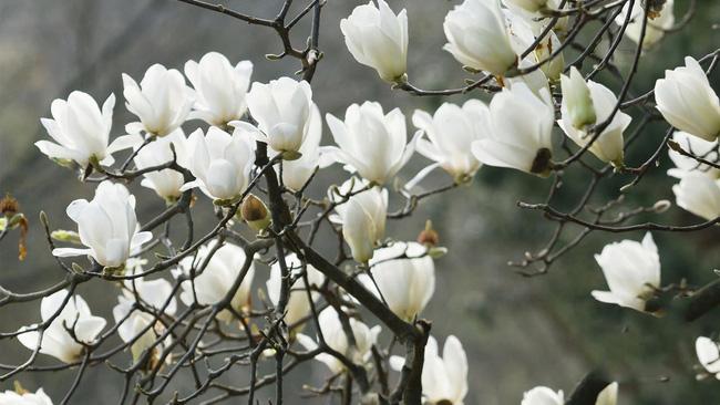 Người sinh vào mùa xuân-hạ-thu-đông nếu chọn đúng các loại cây may mắn bày nơi làm việc và tại nhà sẽ giúp công việc hanh thông, tiền tài đầy túi-5