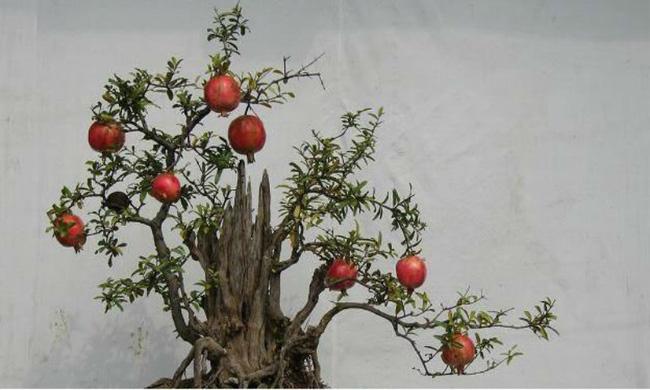 Người sinh vào mùa xuân-hạ-thu-đông nếu chọn đúng các loại cây may mắn bày nơi làm việc và tại nhà sẽ giúp công việc hanh thông, tiền tài đầy túi-8