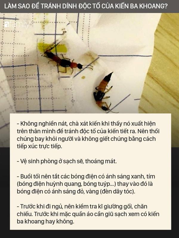 Độc tố của kiến ba khoang mạnh gấp 12-15 lần rắn hổ mang: Nhận biết kiến ba khoang và phòng tránh chất độc của chúng dính vào da-6