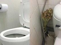 Bỏ 5 nghìn mua sả đặt đúng chỗ này, cả tuần không dọn nhà vệ sinh vẫn thơm ngát