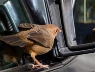 Hỏi: 'Chim bay trong xe có làm trọng lượng của xe thay đổi?', câu trả lời thấu đáo của ứng viên khiến người phỏng vấn mời ở lại ký hợp đồng luôn