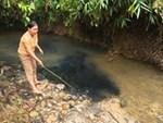 Nước nhiễm dầu nguy hại đến sức khỏe thế nào?-1